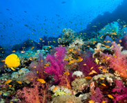 Abu Dhabi - snorkelling and diving on marvelous reefs