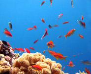 Jeddah - Diving the superb Red Sea coral reefs