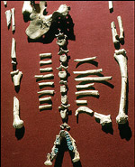 Addis Ababa, remains of Lucy, the earliest fossil finds of a hominid