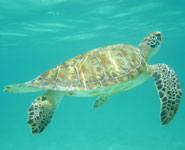 Cancun - a great snorkelling and scuba diving destination