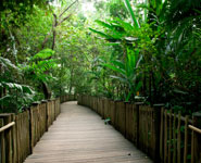 Singapore - Buit Timah Nature Reserve, rain forest within city limits