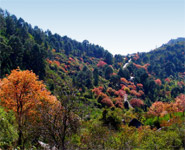Islamabad - Margalla HIlls national park are within easy reach from the city