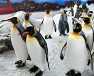 Auckland - Observe fascinating marine life up close in the Kelly Tarlton's Antarctic Encounter and Underwater World